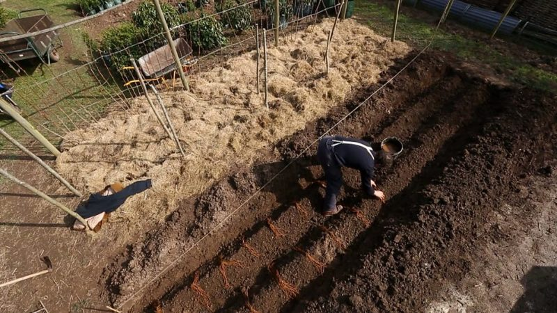 Read more about the article Gardeners World episode 4 2015