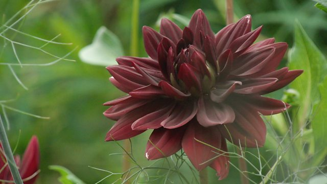 You are currently viewing Gardeners World episode 17 2017