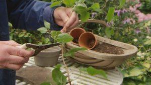 Gardeners World episode 20 2017