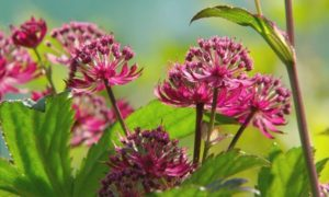 Read more about the article Gardeners' World episode 1 2017