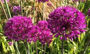 Read more about the article Gardeners' World episode 9 2017