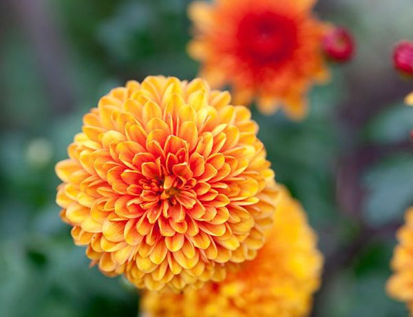 Read more about the article Gardeners World episode 3 2015