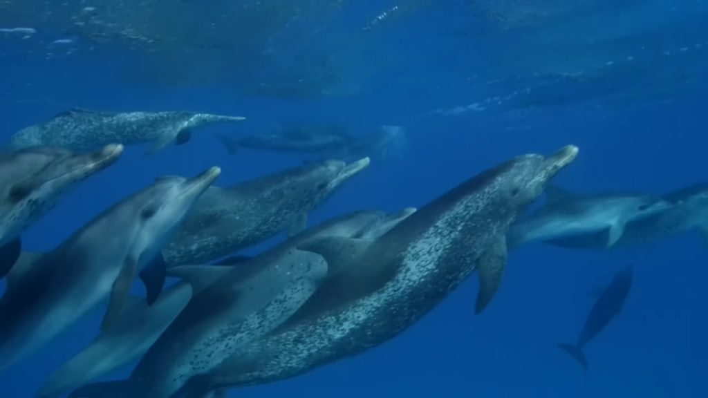Read more about the article Atlantic The Wildest Ocean on Earth ep.1