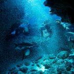 Atlantic The Wildest Ocean on Earth ep.2