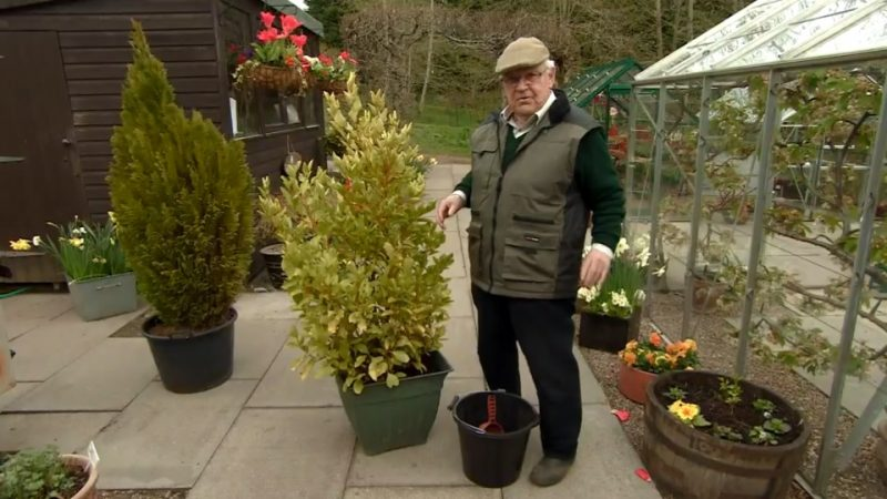 Read more about the article The Beechgrove Garden episode 2 2017