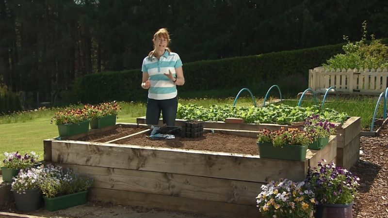 Read more about the article The Beechgrove Garden episode 11 2017