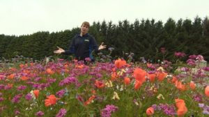 Read more about the article The Beechgrove Garden episode 17 2015
