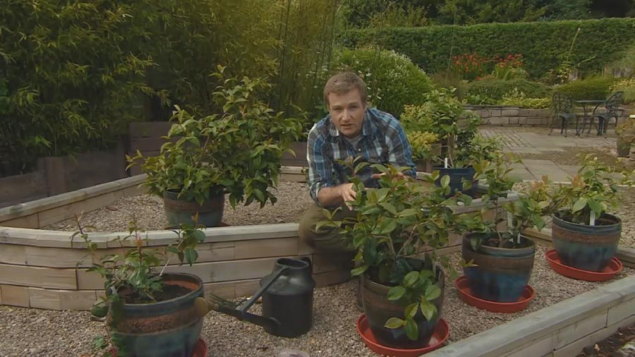 Read more about the article The Beechgrove Garden episode 18 2015