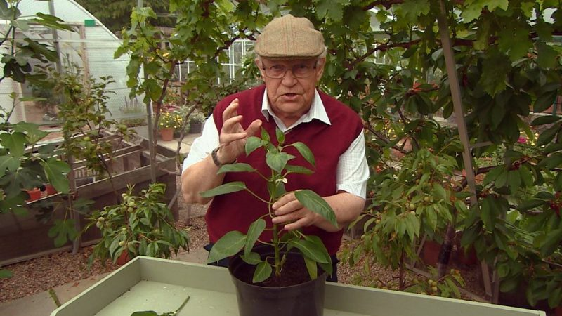 Read more about the article The Beechgrove Garden episode 18 2017