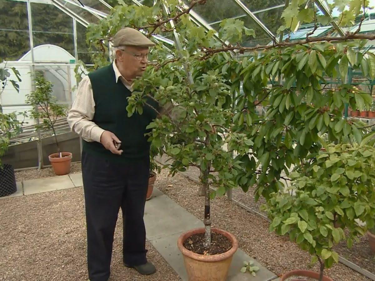 The Beechgrove Garden episode 12 2017