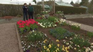 Read more about the article The Beechgrove Garden episode 4 2017