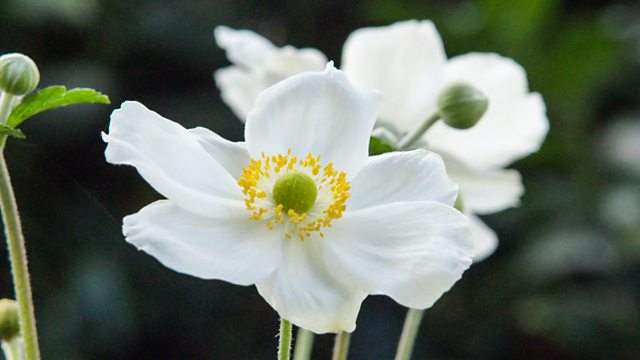 Gardeners World episode 28 2017