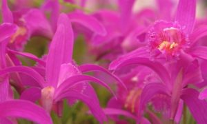 Read more about the article Gardeners World episode 9 2015