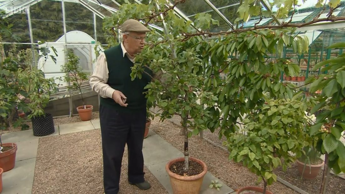 Read more about the article The Beechgrove Garden episode 19 2017
