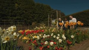 Read more about the article The Beechgrove Garden episode 8 2016