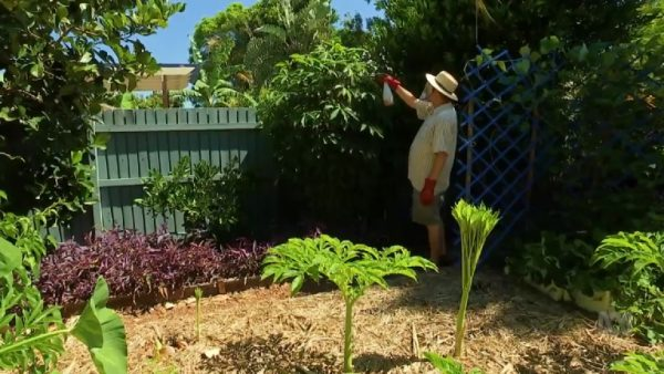 Read more about the article Gardening Australia ep. 5 2018