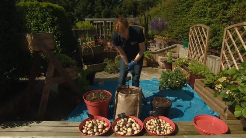 You are currently viewing The Beechgrove Garden episode 17 2016