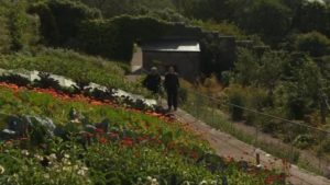 Read more about the article The Beechgrove Garden episode 18 2016