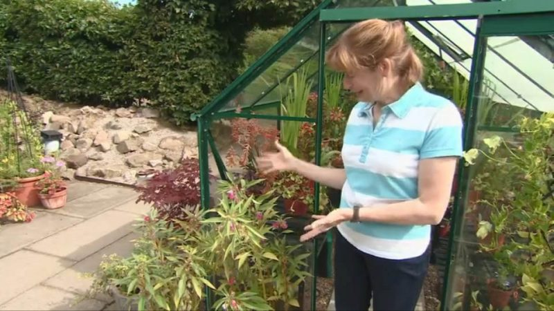Read more about the article The Beechgrove Garden episode 19 2016