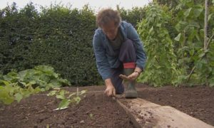 Gardeners World episode 23 2015