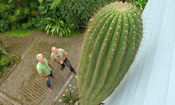 Gardeners World episode 25 2016