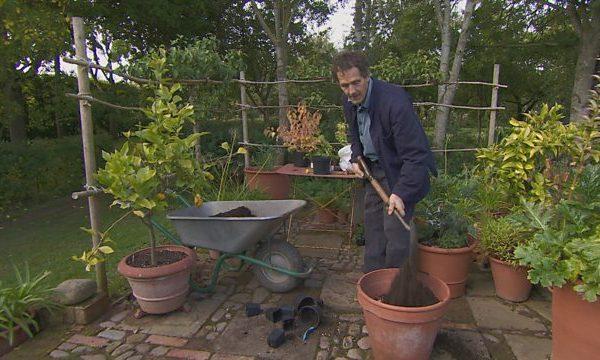 Gardeners World episode 28 2015