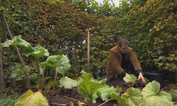 Gardeners World episode 31 2015