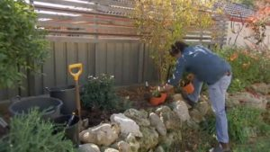 Read more about the article Gardening Australia ep. 8 2018