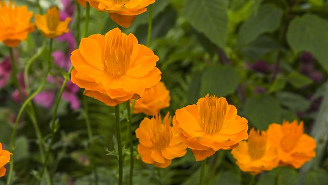 Read more about the article Gardeners World 2018 episode 12