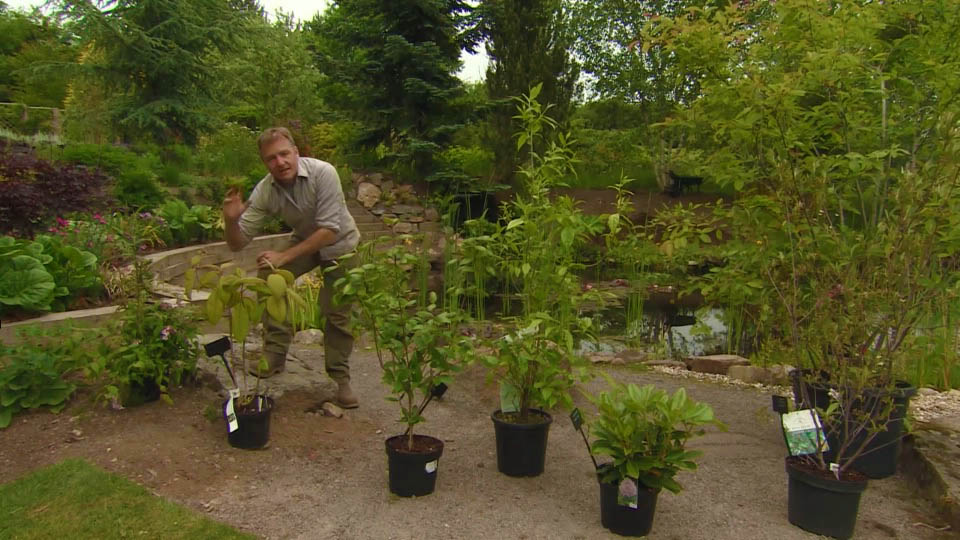 Read more about the article The Beechgrove Garden episode 11 2018