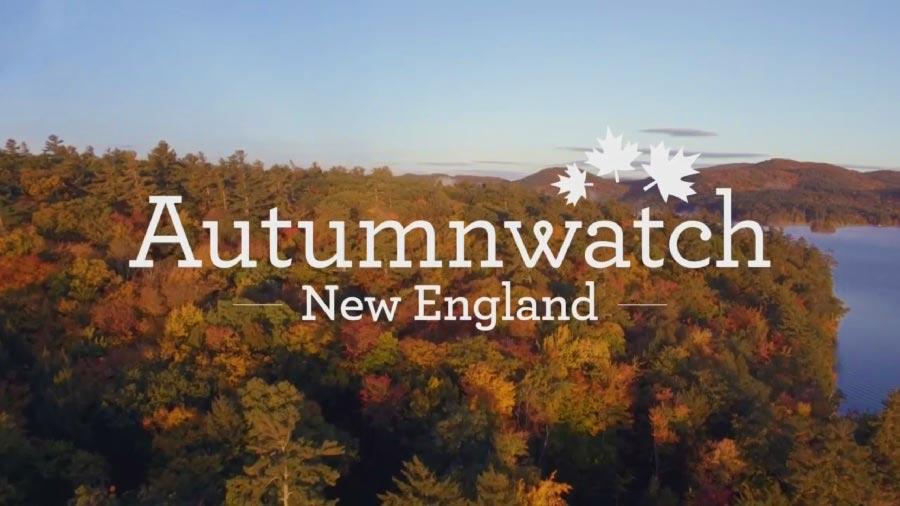 Autumnwatch episode 1 2018