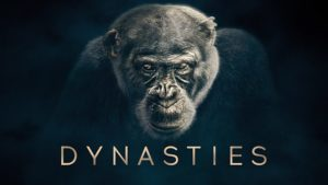 Read more about the article Dynasties episode 1 – Chimpanzee – David Attenborough