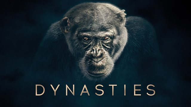 Dynasties episode 1 – Chimpanzee – David Attenborough