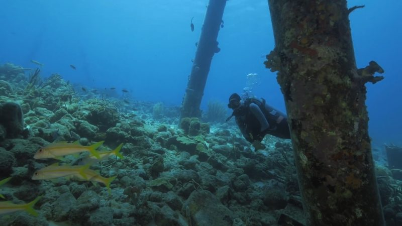 Reef Wrecks episode 1 – Bonaire