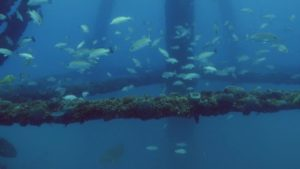 Read more about the article Reef Wrecks episode 2 – Florida Keys: Shipwreck Trail
