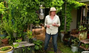 Gardening Australia episode 7 2019