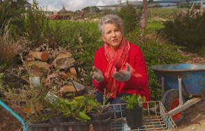 Read more about the article Gardening Australia episode 8 2019