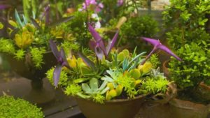 Read more about the article Gardening Australia episode 9 2019