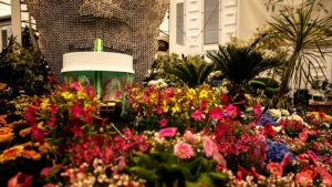 Read more about the article Chelsea Flower Show episode 5 2019