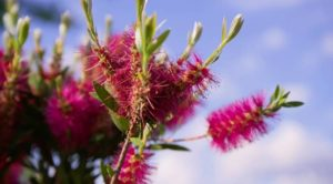 Read more about the article Gardening Australia episode 13 2019
