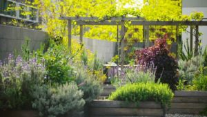 Read more about the article Gardening Australia episode 16 2019