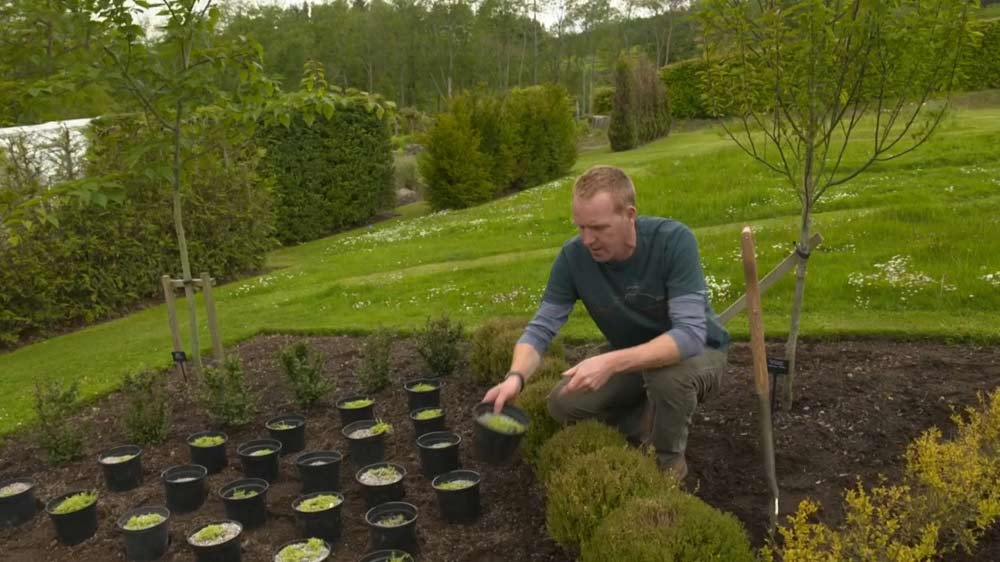 You are currently viewing The Beechgrove Garden episode 6 2019