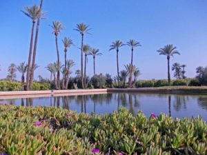 Read more about the article Gardens Near and Far episode 2 – Agdal, Morocco