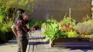 Gardening Australia episode 25 2019