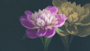 Read more about the article Hampton Court Palace Garden Festival episode 3 2019