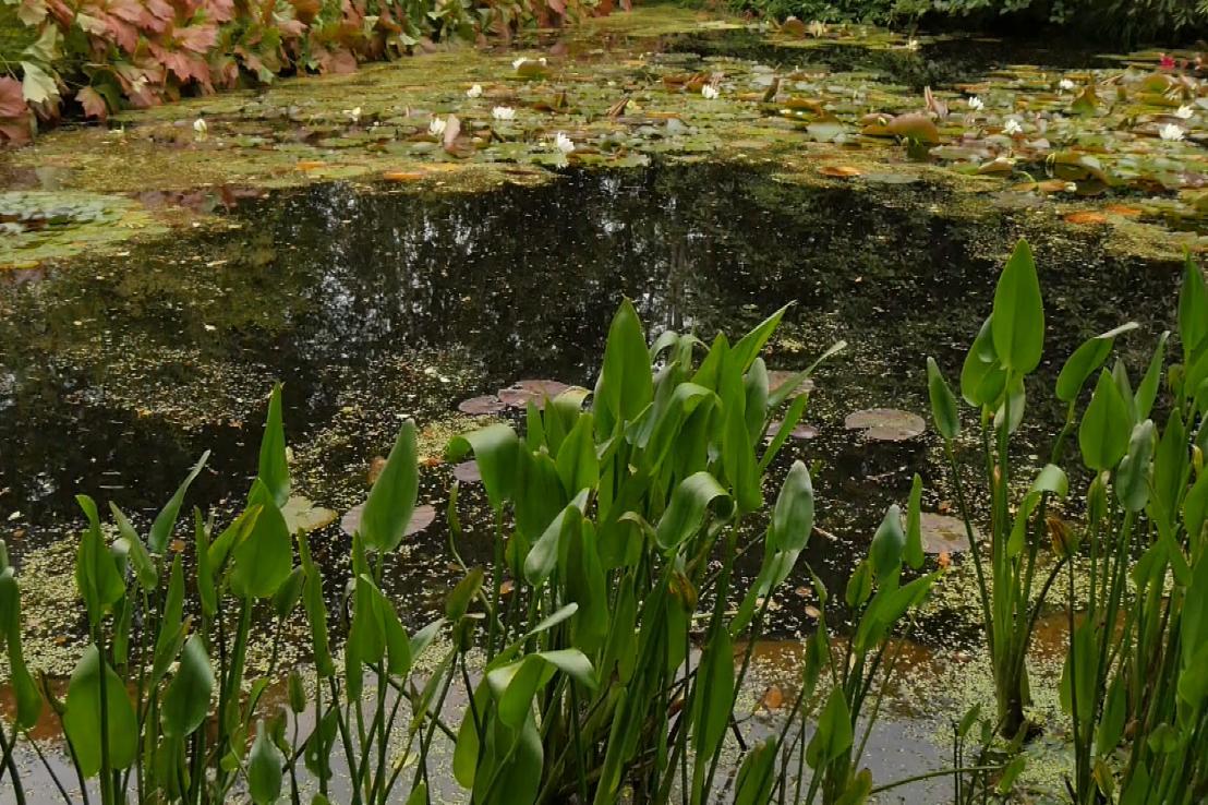 Gardens Near and Far episode 27 – Inverewe