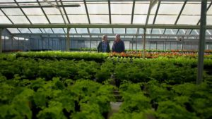 Read more about the article Gardening Australia episode 27 2019