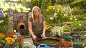 Read more about the article The Beechgrove Garden episode 10 2019