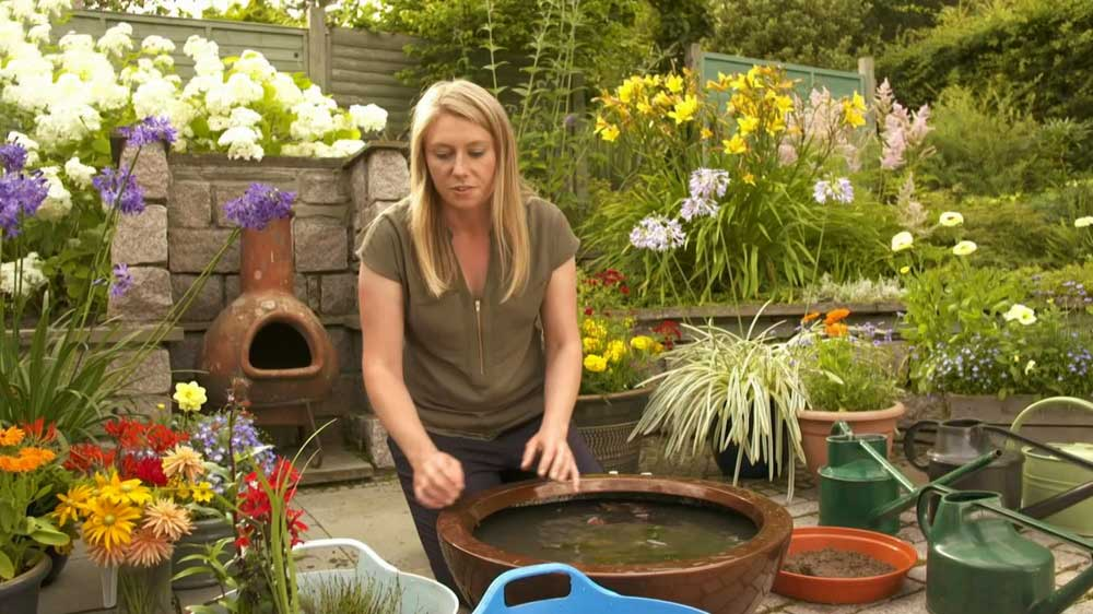 The Beechgrove Garden episode 10 2019