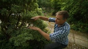 Read more about the article The Beechgrove Garden episode 9 2019